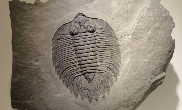 500 miljoen jaar oude hersenen gevonden