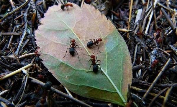 Ook mieren worden somber van quarantaine