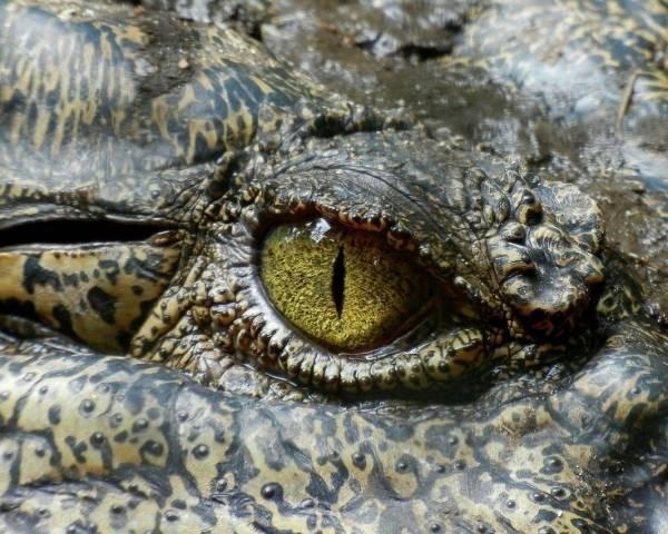 Krokodillen (groep 4/5)
